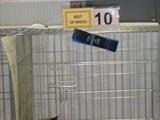 Урсулина на выставке TICA в феврале 2012