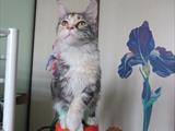Санни акробатка, 1 год