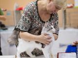 FOREST CAT SHOW 2017 (ICU)
